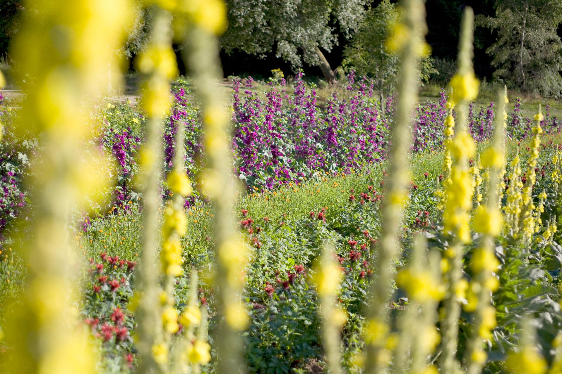 Les Jardins de Bernadette photos plantation 19